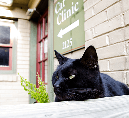 Get to Know the Cat Veterinary Clinic Family