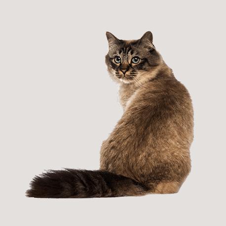 Feline-Focused Veterinary Care