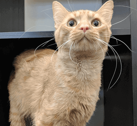 Compassionate Care for Senior Cats